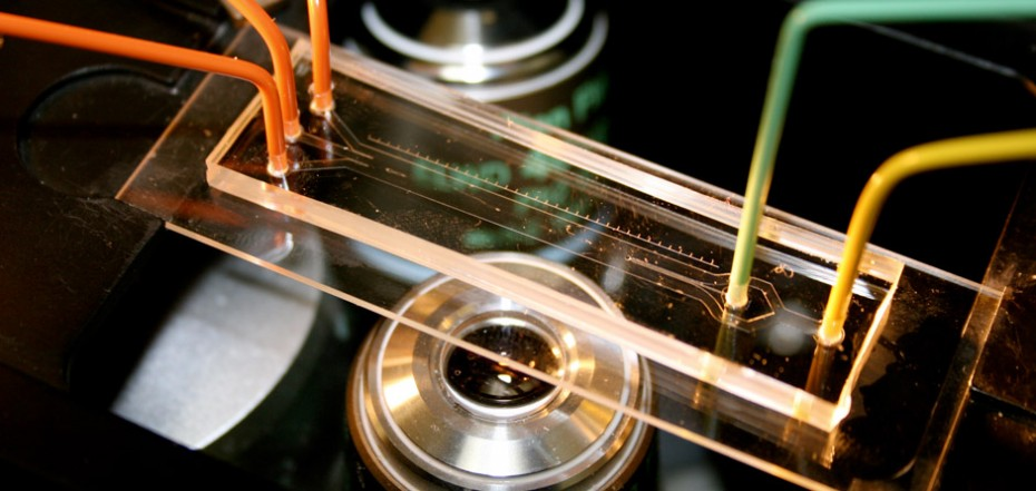 A Microfluidic Channel (credit: Stocker Lab)